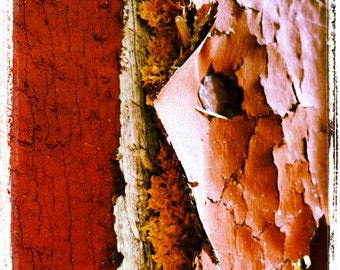 Barn Nail, Peeling Paint, Thru the Viewfinder, Rustic Barn, Vintage Barn, Close Up, Aging, Square, Grunge Americana Old Red Decay Rural farm