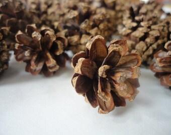 25 Teeny Tiny Pine-cones, fairy pine cones, miniature pine cones , craft pinecones, DIY project pine cones, fairy garden pine cones