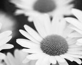 Daisy Photo, Black and White Daisies, Modern Floral Art, Black and White Flower Photo, Gray Wall Decor, Bedroom Wall Art, Bathroom Wall Art