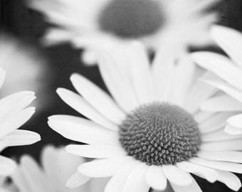Black and White Daisy Photo, Daisy Print, Flower Photograph, Floral Art Print, Garden Photograph, Canvas Art, Bedroom Art, Bathroom Wall Art