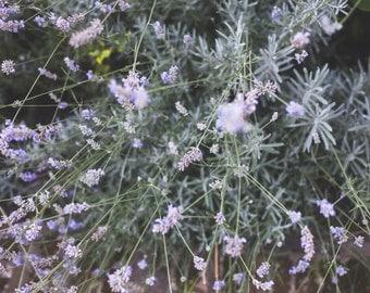 ZoeteLiefde map ' soft Lavender '