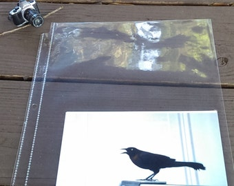 The Crow Cries