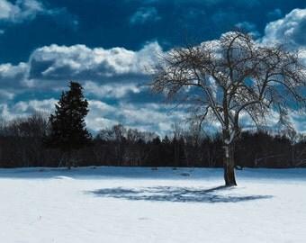snowy pasture.
