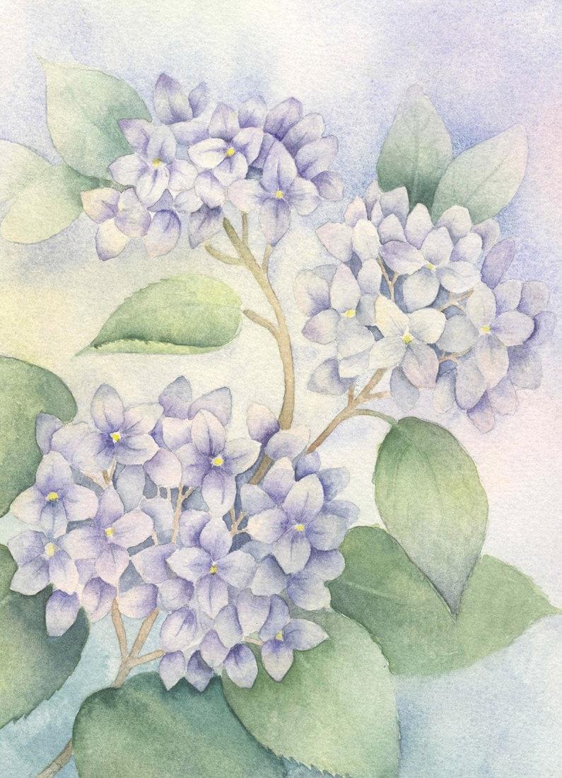 Hydrangea Painting Watercolor Art Print Hydrangea Art Print