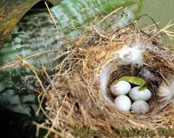 Bird's nest, Instant download photography
