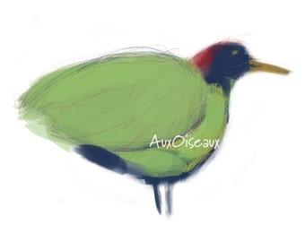 Oiseau vert, bleu et rouge, dessin numérique original, impression de qualité, type giclée. Cadre non-inclus.