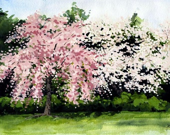 Cherry Blossoms mounted print of an original watercolour painting by Tracy Butler