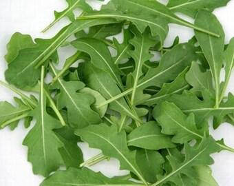Arugula Seeds Organic Herb Seeds Eruca sativa #1181