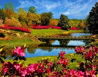Image Lake Forest trees flowers green canvas