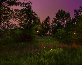 Fireflies at Night Photography, Canada, Summer, Landscape Photography, Forest, Night Photography