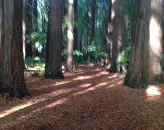 Redwood flax & walk