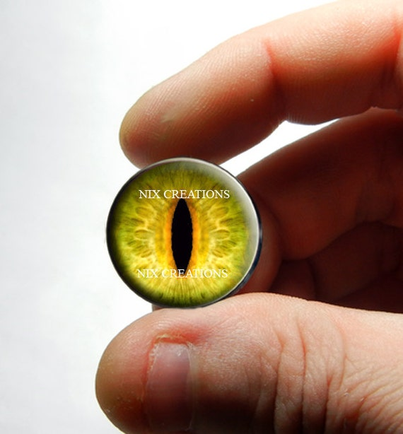 Yellow dragon eye