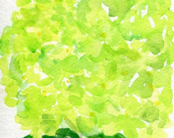 Hydrangea watercolor painting original 4 x 6  Lime Green flower art, hydrangea painting, hydrangeas watercolors floral, hydrangea art