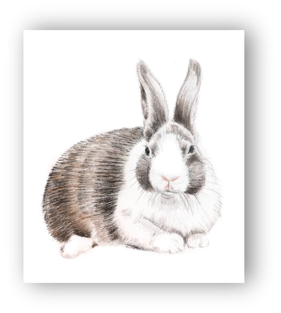 Rabbit Drawing Art Original Colored Pencil Bunny Brown and