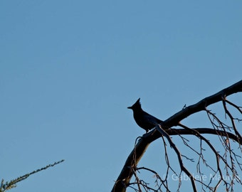 The Blue Jay //  instant download / jpg file / home decor / wall art / nature