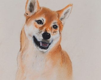 Shiba Inu Dog Art Pastel Drawing By Cori Solomon