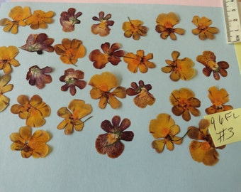 Choose your  Nemesia Flowers Grown, Pressed and Preserved in Alaska 96 FL