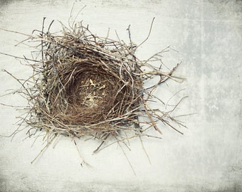 "Nature photography bird nest print natural history art neutral gray white photography rustic modern decor ""A Little Home"""
