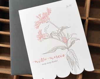 letterpress thank you card centuarea