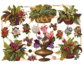 Germany Paper Scraps Lithographed Die Cut Victorian Fern Baskets Victorian Flowers  7296