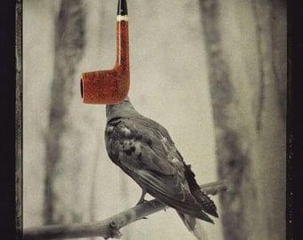 thisisnotabird Original Collage