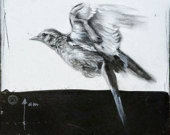 Skylark - original graphite drawing