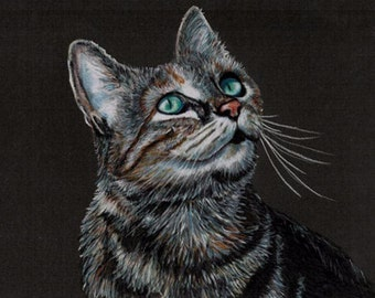 Colored Pencil Sunlit Tabby Cat Drawing