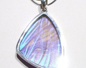 Real Butterfly Wing Jewelry Pendant Sterling Silver  Sulkowski xl Wing XxFREE CHAINxX