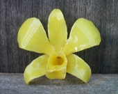 Free Shipping REAL Natural Spring Buttercup Yellow ORCHID in Poly Resin Pin and Pendant