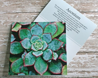 rosette aeonium photo note card succulent // Nature Floral Plant Life Botanical Series // Prairie Garden