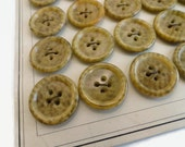 Fine Antique Vegetable Ivory Buttons - 6 Early 1900s Vintage in Your Choice of Sizes
