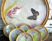 Vintage Tray and Coaster set with Real Butterflies and Ferns New in the Box