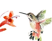 Hummingbird art print, hummingbird watercolor print, bird art, humming bird and flower, mothers day, nursery decor, bird lover, cottage chic