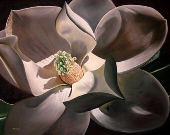 Magnolia Blossom, magnolia art, magnolia painting, magnolia tree blossom with jumping spider, artwork for sale, flower artwork, realism art