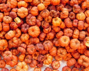 8 Cups Orange Putka Pods Mini Pumpkin Fixins Potpourri Candles Crafts Naturals Primitive Lodge