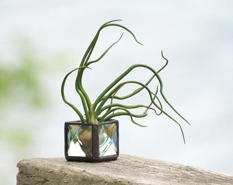 Mini Air Plant Holder Clear Stained Glass Terrarium Cubed Glass Box Planter
