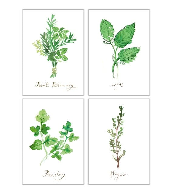 Kitchen Art Vegetables Print Botanicals Kitchen Art: Kitchen Prints Set Of 4 Herb Prints Herb Illustration