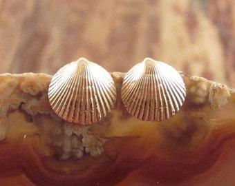 Gold Seashell Earrings 14K Gold Earrings Seashell Stud Earrings Seashell Studs Rose Gold Earrings Womens Gift Women 14K Studs Sea Shell Stud