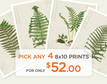 Special Promo - Any 4 8x10 Prints for only 52 dollars