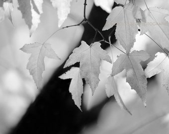 Black and white photography, nature photography, black and white nature, tree photography, trees, leaves, fine art photography