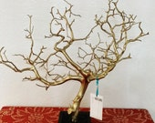 "19"" Gold Jewelry Tree Accessory holder / Jewelry Organizer"