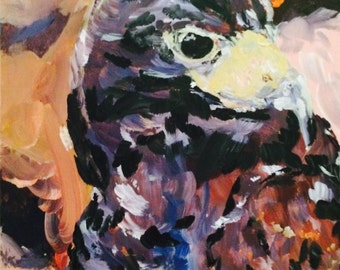 Hawk-Eye // hawk // hawk portrait // bird