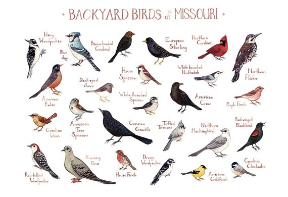 Related Keywords Amp Suggestions For Missouri Birds