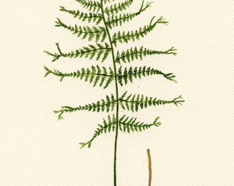 Fern 22 - Original Watercolor Painting - signed - 8x12 inch - by E.Crow