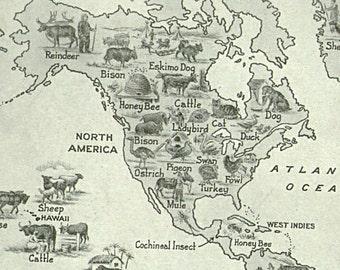 Vintage World Map Animals 1920s original
