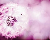 dandelion wall art nature photography dandelion pink photography 8x10 24x36 fine art photography floral pink magenta nursery decor bedroom