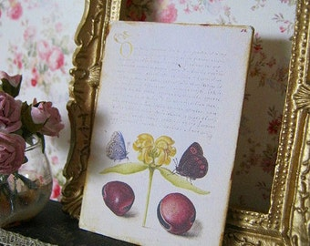 16th Century Calligraphy & butterfly Print for Dollhouse Miniature
