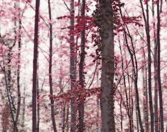 Tree Art - Woodland Print - Ethereal Austrian Forest in Marsala Burgundy Wine -  Fine Art Photo - Ethereal - Nature Art - Nature Print