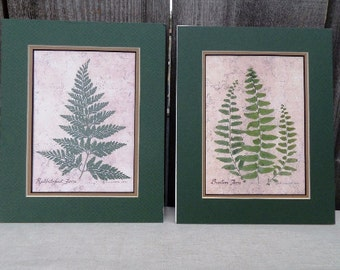 Set of 2 Fern Botanical Prints with mats included