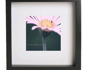 pink gerbera,gerbera wall art,flower wall art,flora imagery,square print,fine art photography,home decor,green bokeh
